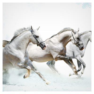 دانلود تصویر با کیفیت تاخت و تاز سه اسب سفید رنگ زیبا با فرمت jpg