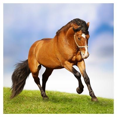 دانلود عکس با کیفیت دویدن اسب قهوه ای رنگ بر روی علف ها