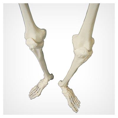 دانلود عکس با کیفیت دو پای یک اسکلت انسان با پسوند jpg