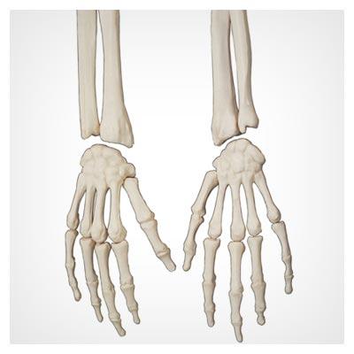 دانلود عکس رایگان مفاصل دو دست انسان و اسکلت استخوان انگشتان