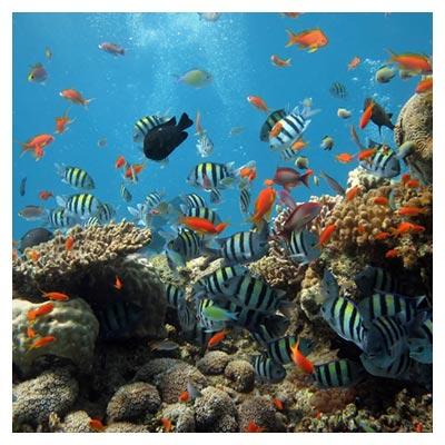 دانلود عکس شاتراستوک ماهی ها و مرجان های کف اقیانوس با پسوند jpg