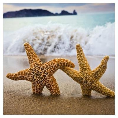 دانلود عکس رایگان دریا و ساحل و دو ستاره دریایی دست در دست هم