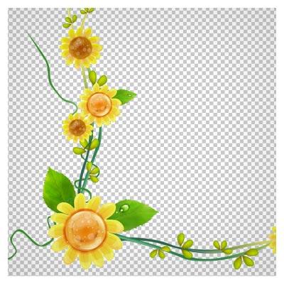 فایل دوربری شده گل های زیبای آفتابگردان بصورت حاشیه ای