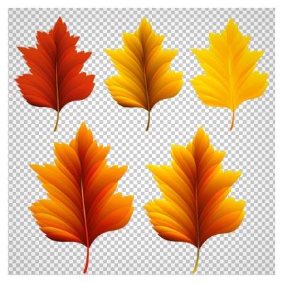مجموعه برگهای پاییزی نارنجی بصورت دوربری شده و بدون پس زمینه